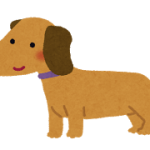 dog_miniature_dachshund