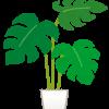 観葉植物の植え替えをしてみました